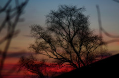 Orton effect Tree silhoutte  and blood red sky (Laineyb93) Tags: colour window crimson nikon nightsky through oilpainting edit redskyatnight bloodred amazingsky march14th ortoneffect branchesintheway ortonblur