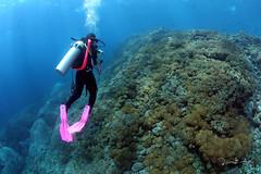 Pink (Randi Ang) Tags: bali canon indonesia photography eos underwater angle wide dive scuba diving fisheye ang 15mm nusa randi 6d penida