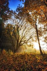 IMG_2405-Bearbeitet-Bearbeitet.jpg (MSPhotography-Art) Tags: morning autumn nature misty clouds germany landscape deutschland nebel outdoor herbst natur wolken alb landschaft wandern wanderung badenwrttemberg swabianalb burghohenzollern albtrauf schwbschealb
