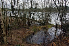 25.3.16 Delamere Forest 36 (donald judge) Tags: trees water forest countryside cheshire mere delamere