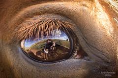 'Esse cavalo que eu tenho...' (Suzana Fernandes Fotografia) Tags: horse rio criollo caballo grande eyes do olhos ojos campo cavalos sul pampa gaucho gacho crioulo campeiro tupanciret bocavera