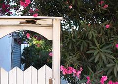 Garden Gate, Tel Aviv (marylea) Tags: pink gardens israel telaviv gate oleander 2015 may15 telavivyafo