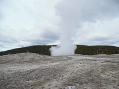 SAM_0221 (erindd4) Tags: park old national yellowstone geyser faithful