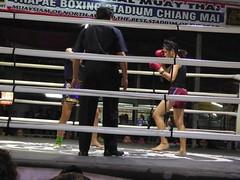 Chiang Mai (Muay Thai Boxing), Thailand (Jan-2016) 10-015 (MistyTree Adventures) Tags: thailand fight referee women asia seasia indoor chiangmai boxing muaythai thaiboxing boxingmatch boxingring panasoniclumix thapaeboxingstadium