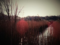 Marsh River (Alexander Mabe) Tags: trees sun hot cold water reflections stream glare shadows shine bright stones marsh