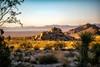 Untitled (ctklink) Tags: california canon rebel desert joshuatree tyler t3i klink nikcollection