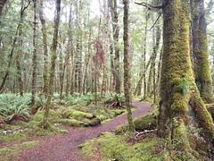 La forêt du Kepler Jour 3