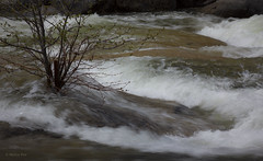 Chilnuana Rapids (San Francisco Gal) Tags: tree water creek rapids yosemitenationalpark wawona chilnuana