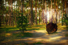 . (Alex-Bell) Tags: city summer sun tree nature square russia voronezh