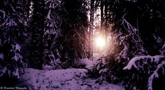 wintershine (Brunobinch) Tags: travel trees winter sunset shadow sun sunlight white snow tree art nature yellow forest suomi finland relax woods shine purple outdoor wildlife gimp happiness pic hide silence enjoy finnish wintertime 2015 hmeenlinna kikl brunobinch