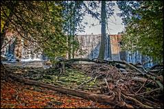 Le sous-bois et le barrage / The undergrowth and dam (Jeanluc Verville) Tags: dam barrage bois undergrowth sousbois