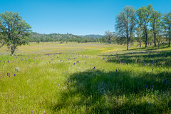 20160417-DSCF6392-2 (Larry Moberly) Tags: california unitedstates livermore
