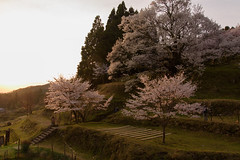 29Butsuryuji Temple (anglo10) Tags: sunset japan cherry temple