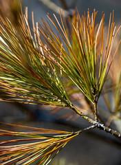 evergreen awakens... se rveille (Bob (sideshow015)) Tags: ontario canada spring nikon 7100 awake mississauga printemps d7100