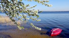 Spring landscape (radimersky) Tags: trees red lake flower water landscape boat spring europa europe day branch branches sony poland polska sunny cybershot bloom horizont dzień woda jaro widok wiosna łódka jezioro drzewo czerwona gałąź krajobraz opolskie słonecznie turawa gałęzie turawskie kwitnące niwki kwitnąc dschx90