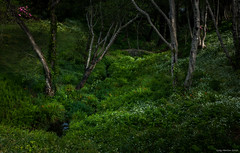 16-07759-Edit.jpg (kgsix) Tags: park trees usa oregon us unitedstates newport lincolncounty
