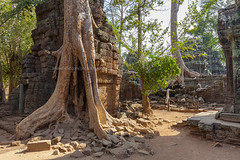 Tree Roots Covered Ta Prohm Ancient Temple. (baddoguy) Tags: old sculpture rescue tree castle history archaeology overgrown horizontal architecture forest photography rainforest cambodia southeastasia khmer religion nopeople unescoworldheritagesite adventure backgrounds material root siemreap angkor hinduism ancientcivilization discovery thepast apsara covering traveldestinations colorimage taprohmtemple famousplace buildingexterior oldruin internationallandmark templebuilding builtstructure stonematerial cambodianculture wallbuildingfeature carvingcraftproduct