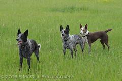 DSC_2940 (erinmcgillphotography) Tags: dog emily lobo hayek argos
