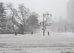 Blizzard Jonas: NYC streets (gigi_nyc) Tags: nyc newyorkcity winter snow storm blizzard blizzard2016 jonasblizzard