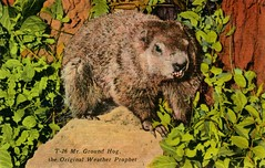 Groundhog Day Weather Prophet (Alan Mays) Tags: old winter brown green weather animals vintage holidays antique events ephemera celebrations postcards groundhogday prophecies february2 prophets woodchucks linens groundhogs predictions weatherprophet linenpostcards mrgroundhog