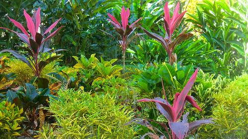 Jamaica: Tropical rainforest / Ocho Rios
