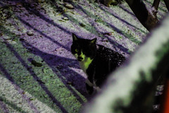 Today's Cat@2016-01-20 (masatsu) Tags: cat pentax cc100 catspotting mx1 thebiggestgroupwithonlycats