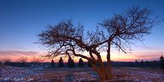 Angusglen_5 ( Ed Lee) Tags: winter sunset shadow snow color tree silhouette contrast landscape evening nikon 7100 angus branches glen tokina 1228 autofocus platinumpeaceaward