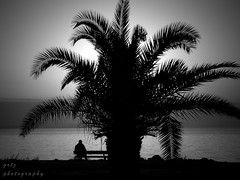 under the tree... (gregtz) Tags: sea people blackandwhite bw tree bench blackwhite seaside emotions patras shilouettes