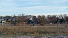 20160118_Zijdelmeer (3) (GemeenteUithoorn) Tags: winter cold holland ice frozen frost bevroren nederland amstel landschap noordholland ijs koud landschappen waterlijn uithoorn zonsopkomst hollandse vriezen dekwakel dorpscentrum knotgroep molenvaart