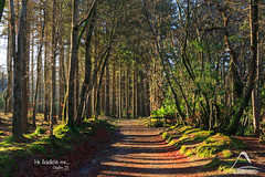 He leadeth me... (kramelliott) Tags: park trees winter light colour nature beauty leaves forest canon woodland newcastle wonder landscape natural walk glory warmth adventure creation change northernireland ni awe tranquil amazed discover tollymore eos700d