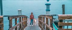 L1001480 (jiaxu he) Tags: california leica dogs 50mm labrador yellowlab newportbeach konica yami orangecounty m9 mhexanon