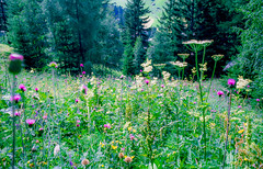 St Anton, 1994 (Thomas Tolkien) Tags: landscape education teacher tolkien thomastolkien tomtolkien tolkienphotography httpsthomastolkienwordpresscom