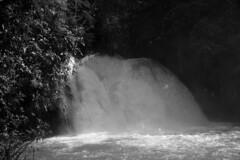 Lifeblood Of The Forest (elhawk) Tags: bw mexico waterfall falls chiapas cascadas robertobarrios