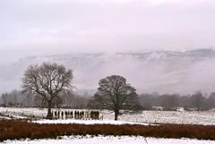 Strathblane (Michelle O'Connell Photography) Tags: winter tree nature field glasgow stirlingshire strathblane michelleoconnellphotography