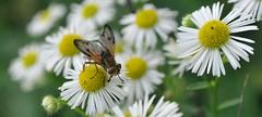 voglia di primavera... (andrea.zanaboni) Tags: flowers primavera insect spring eyes nikon occhi fiori colori prato magicmoments insetti