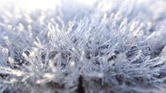 In The Palace Of The Snow Queen (Coquine!) Tags: greatbritain winter ice closeup frost dof unitedkingdom bokeh hampshire eis nahaufnahme swanwick sarisburygreen christianleyk