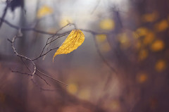 Blowing in the wind (Psztor Andrs) Tags: blue autumn trees brown cold nature forest photography leaf nikon hungary windy leaflet andras pasztor d5100