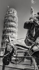 The Sights and the Sounds (Mark.L.Sutherland) Tags: cameraphone 2 two blackandwhite bw italy horse holiday detail tower history tourism monochrome animals mono high angle flag perspective samsung structure pisa smartphone tall phonecamera sutherland slavery leaning sounds sights workhorse beautifulanimal theleaningtowerofpisa phoneography androidography galaxys5 thesightsandthesounds