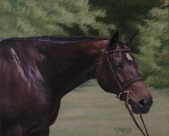 Hazel (debifitz) Tags: portrait horse pastel hunter equine hunterjumper horseportrait horseart equineart pastelportrait equineportrait pastelmat djfitzgerald debrafitzgerald debrajfitzgerald debifitzgerald