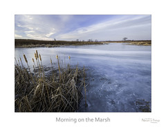 Morning on the Marsh (baldwinm16) Tags: morning winter ice nature weather sunrise landscape outside outdoors frozen illinois midwest january il environment marsh habitat slough climate wintersunrise naturepreserve wetland frozenlake frozenpond winterlandscape winterscene naturelandscape