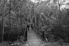 0D6A5657 - Glenrock State Conservation Area (Stephen Baldwin Photography) Tags: trees blackandwhite water monochrome newcastle walking landscape bush sand state earth conservation australia nsw area glenrock