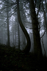 DSC_0012m (xmenifield) Tags: park tree fog oregon forest bend eugene bent pnw