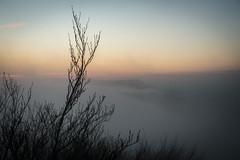 Nebelrausch (opograph) Tags: blue winter sky fog nebel himmel wolken dmmerung landschaft wald ostalb