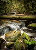Mullet (Mike Hankey.) Tags: published warriewood green irrawong waterfall moss forest landscape piublished