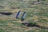 Isla Magdalena (silkylemur) Tags: ocean chile cruise sea patagonia seascape southamerica pinguinos canon lens landscape tierradelfuego ship fullframe canoneos ona zoomlens endoftheworld beaglechannel chilena puntaarenas findelmundo islamagdalena landscapephotography magellanicpenguins llens 24105mm canonef canonef24105mmf4l canonef24105mmf4lisusm キャノン magdalenaisland eflens patagoniachilena selknam canonef24105mmf4lisusmlens efmount chileanpatagonia regióndemagallanesydelaantárticachilena canoneos6d fuegian regióndemagallanesydelaan