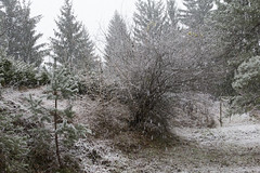 it's snowing again (cyberjani) Tags: winter lake snow tree nature forest slovenia rakitna