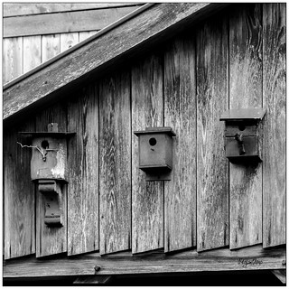12_Black & White_Nichoirs / Birdhouse