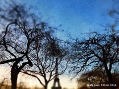 Cheveux au vent (JEAN PAUL TALIMI) Tags: paris texture nature plante vent ciel arbres toureiffel rue trocadero extrieur arbre bleue silouettes talimi