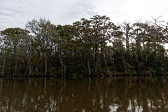 Bagna Honey Island | Honey Island Swamp