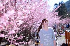 Love Season (JIMI_lin) Tags: taiwan sakura  tw